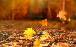 Food Life: Shifting From Summer to Fall