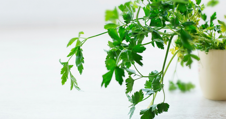 Nutrient Spotlight: Parsley
