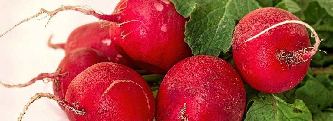 Its Radish Season, Eat Up!